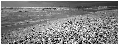Shell-covered beach, Sanibel Island. Florida, USA (Panoramic black and white)