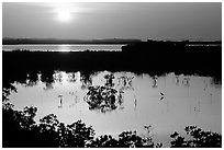 Sun setting over mangrove coast. The Keys, Florida, USA (black and white)