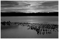 Large pond with birds at sunset under colorful sky, Ding Darling NWR. Florida, USA (black and white)