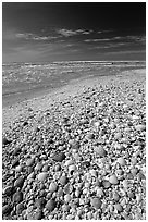 Beach covered with sea shells, mid-day, Sanibel Island. Florida, USA ( black and white)