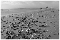 Shells washed-up on shore and beachcombers, Sanibel Island. Florida, USA (black and white)