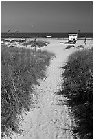 Sandy path leading to beach, Jetty Park. Cape Canaveral, Florida, USA (black and white)