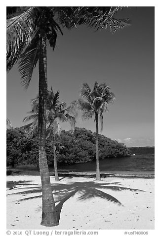 Palm trees and beach, John Pennekamp Reef State Park, Key Largo. The Keys, Florida, USA
