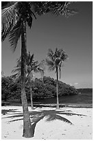 Palm trees and beach, John Pennekamp Reef State Park, Key Largo. The Keys, Florida, USA (black and white)
