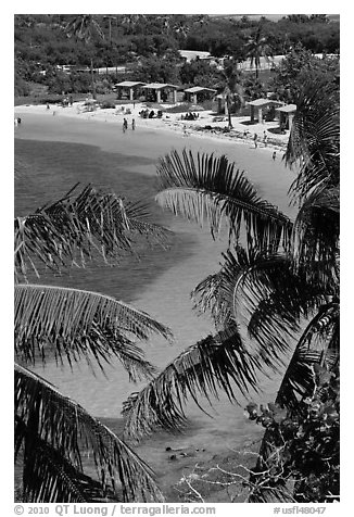 Beach and palm trees from above, Bahia Honda State Park. The Keys, Florida, USA (black and white)