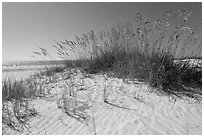 White sand beach with grasses, Fort De Soto Park. Florida, USA ( black and white)