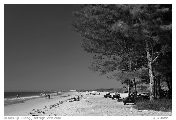 White sand beach and ironwood trees, Fort De Soto Park. Florida, USA (black and white)