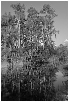 Cypress reflected in channel along Tamiami Trail, Big Cypress National Preserve. Florida, USA (black and white)