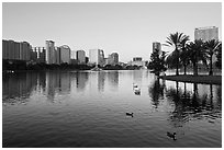City skyline with row of palm trees at sunrise, Sumerlin Park. Orlando, Florida, USA ( black and white)