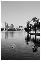 Swan, palm trees, and skyline, lake Eola. Orlando, Florida, USA ( black and white)