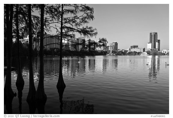 Bald Cypress and skyline, Sumerlin Park. Orlando, Florida, USA (black and white)