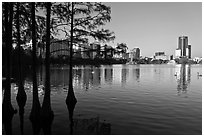 Bald Cypress and skyline, Sumerlin Park. Orlando, Florida, USA ( black and white)