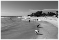 Turner Bearch, Captiva Island. Florida, USA ( black and white)