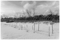 Sea turtle nestling area, Fort De Soto beach. Florida, USA (black and white)
