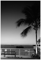 Bench and palm tree and sunset. Key West, Florida, USA ( black and white)