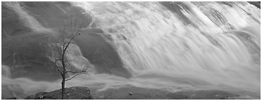 Bare tree on edge of wide waterfall. Georgia, USA (Panoramic black and white)