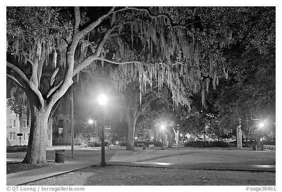 Square by night with Spanish Moss hanging from oak trees. Savannah, Georgia, USA (black and white)