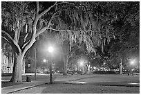 Square by night with Spanish Moss hanging from oak trees. Savannah, Georgia, USA ( black and white)