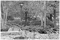 Railings, lamp, and trees in autumn colors, Centenial Olympic Park. Atlanta, Georgia, USA ( black and white)
