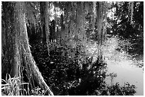 Cypress and reflections, Lake Martin. Louisiana, USA (black and white)