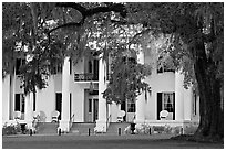Antebellum house and live oak tree. Natchez, Mississippi, USA (black and white)