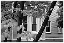 Leaves and house detail. Columbia, South Carolina, USA ( black and white)