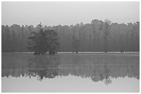 Lake with cypress and dawn. South Carolina, USA (black and white)