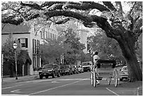 Street and horse carriage. Charleston, South Carolina, USA (black and white)