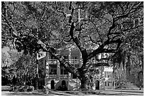Live oak tree and brick house known as the Castle. Beaufort, South Carolina, USA (black and white)