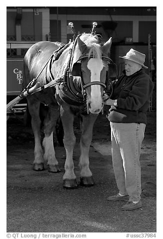 Woman grooming carriage horse. Beaufort, South Carolina, USA
