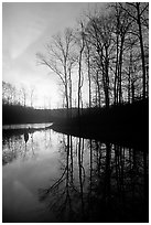 Sunrise over a pond. Tennessee, USA ( black and white)