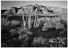 Organ Pipe cactus and Ajo Range, late afternoon. Organ Pipe Cactus  National Monument, Arizona, USA (black and white)