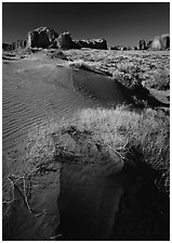 Grasses and sand dunes. Monument Valley Tribal Park, Navajo Nation, Arizona and Utah, USA (black and white)