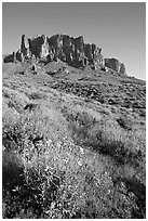 Brittlebush (Encelia farinosa) and craggy mountains, Lost Dutchman State Park, late afternoon. Arizona, USA (black and white)