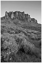 Craggy Superstition Mountains and wildflowers, Lost Dutchman State Park, sunset. Arizona, USA ( black and white)