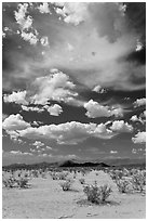 Sandy flat and clouds, Sonoran Desert National Monument. Arizona, USA ( black and white)