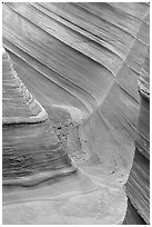 The Wave, lateral formation. Vermilion Cliffs National Monument, Arizona, USA ( black and white)