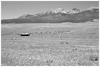 Meadow, Sangre de Cristo range. Colorado, USA ( black and white)