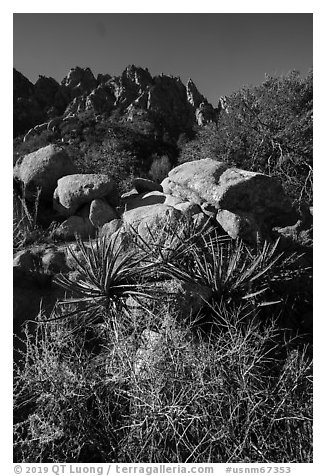 Desert plants and Organ Needles. Organ Mountains Desert Peaks National Monument, New Mexico, USA (black and white)
