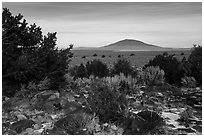 Sagebrush, desert plants, and Ute Mountain. Rio Grande Del Norte National Monument, New Mexico, USA ( black and white)