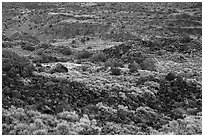 Volcanic rocks and cliffs, Lower Gorge. Rio Grande Del Norte National Monument, New Mexico, USA ( black and white)