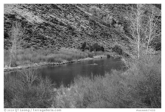 Willows and trees along the Rio Grande River. Rio Grande Del Norte National Monument, New Mexico, USA (black and white)