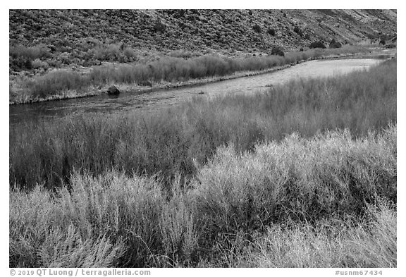 Shrubs and red willows lining up shores of the Rio Grande River. Rio Grande Del Norte National Monument, New Mexico, USA (black and white)
