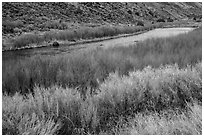 Shrubs and red willows lining up shores of the Rio Grande River. Rio Grande Del Norte National Monument, New Mexico, USA ( black and white)