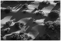 Dunes from above. Gold Butte National Monument, Nevada, USA ( black and white)