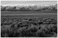Sagebrush and mountain range. Nevada, USA (black and white)