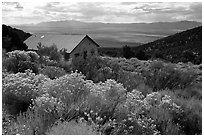 Sage in bloom and cabin, Snake Range. Nevada, USA ( black and white)