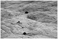 Shrubs and cross-bedded yellow sandstone. Grand Staircase Escalante National Monument, Utah, USA ( black and white)
