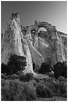 Sagebrush and Grosvenor Arch at dawn. Grand Staircase Escalante National Monument, Utah, USA ( black and white)