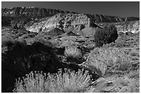 Rabbitbrush in bloom and Straight Cliffs. Grand Staircase Escalante National Monument, Utah, USA ( black and white)